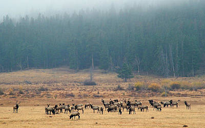 Elk In The Fall Fog  Poster
