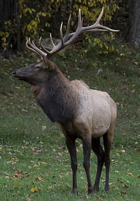 Elk Pride Poster