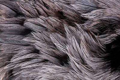 Emu Feathers Poster by Hakon Soreide