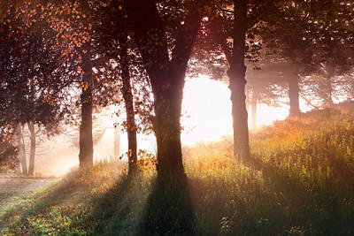 Enchanted Meadow Poster by Debra and Dave Vanderlaan