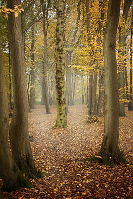 Poster featuring the photograph English Forest In Autumn by Ethiriel  Photography