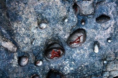 Eroded Rock With Dried Leaves Poster