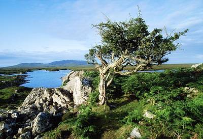 Errisbeg Mountain, Co Galway, Ireland Poster