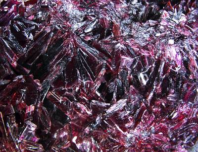 Erythrite Crystals, Macrophotograph Poster by Pasieka