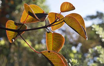 Euphorbia In October Poster
