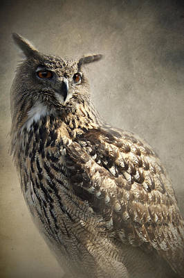 Poster featuring the photograph European Eagle Owl by Ethiriel  Photography