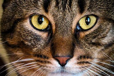 Face Framed Feline Poster by Art Dingo