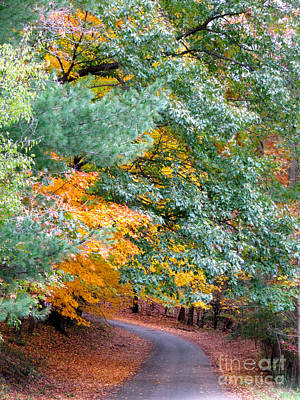 Fall Colored Country Road Poster by Joan McArthur