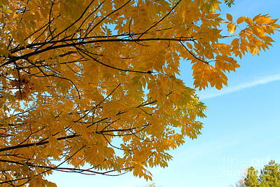 Fall Colors 111 Poster by Pamela Walrath