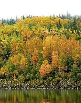 Fall Foliage Poster by Sylvia Hart