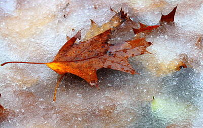 Poster featuring the photograph Fall Frost by Patrice Zinck