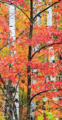Fall Layers II Poster