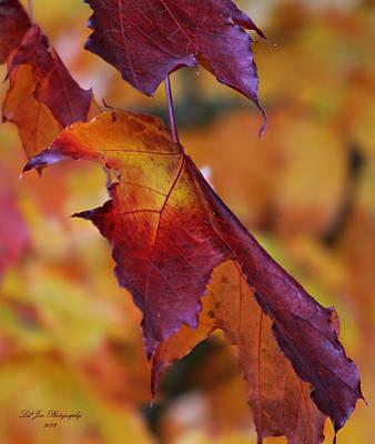 Fall Leaf Poster by Jeanette C Landstrom