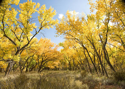 Fall Leaves In New Mexico Poster