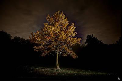 Fall Tree Poster by Nicholas  Grunas