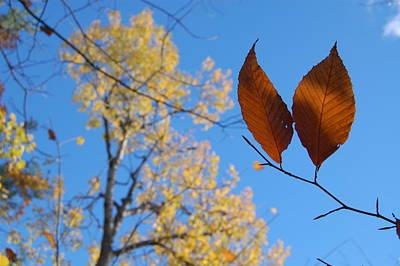 Fall Sky Poster
