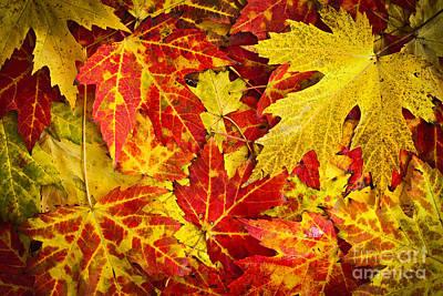 Fallen Autumn Maple Leaves  Poster by Elena Elisseeva