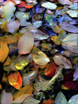 Fallen Leaves Poster by Don Wright