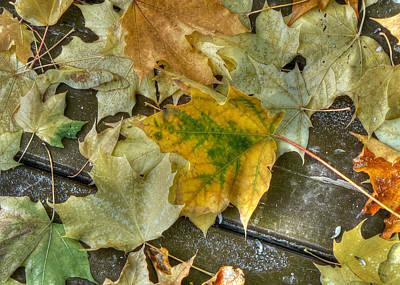 Fallen Leaves Poster by Lisa Knechtel