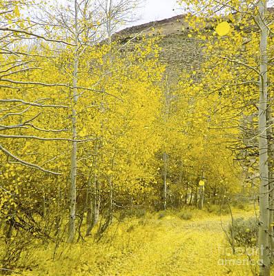 Falling Aspen Leaves Poster