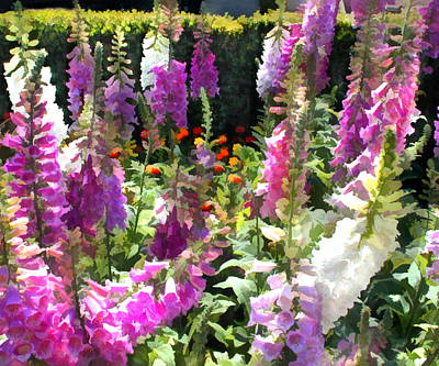 Fanfare Of Foxgloves Poster by Elaine Plesser
