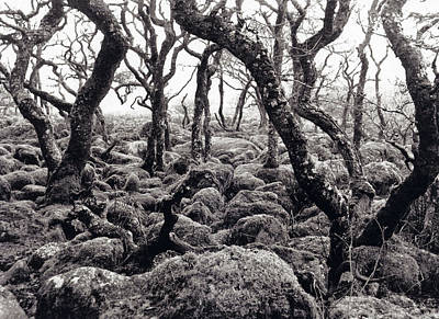 Fangorn Forest Black A Tor Copse Dartmoor Poster by Rachel Burch