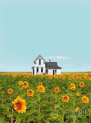 Farmhouse In A Field Of Sunflowers Poster