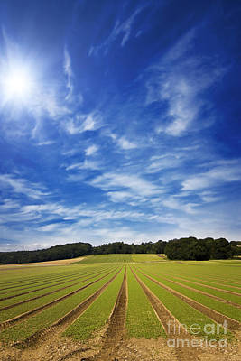 Farmland Furrows In Perspective Poster