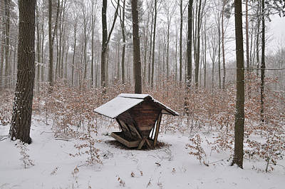 Feed Box In Winterly Forest Poster