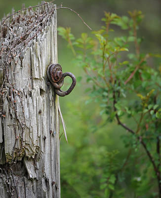 Fence Post Poster by Brian Mollenkopf