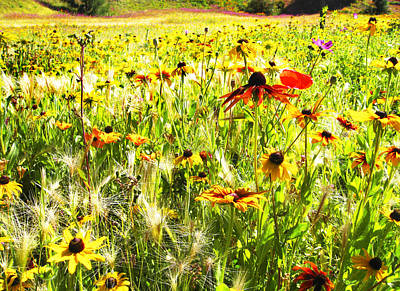 Field Of Bright Colorful Wildflowers Poster