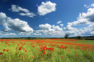 Field Of Red Poppies Poster by Chris Lishman