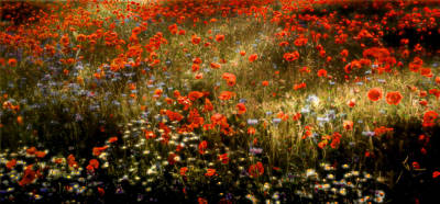 Field Of Wildflowers Poster
