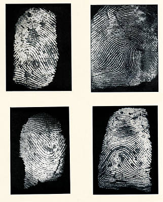 Fingerprints Made Visible With Ink Poster by Sheila Terry