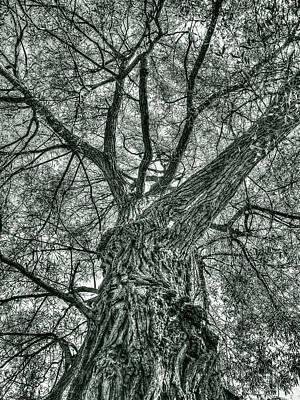 Finkles Landing Tree Poster