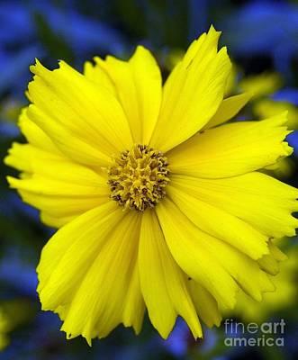 Firey Yellow Flower Poster