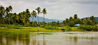 Fisherman In Rice Paddy Poster