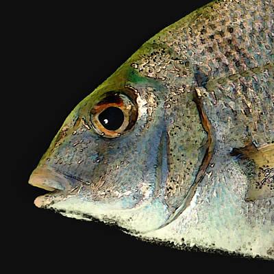 Fisheye Poster by Karen Lynch