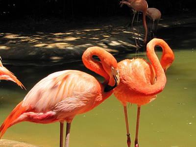 Flamingo Dream Poster