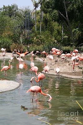 Flamingo Lagoon I Poster