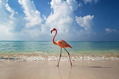 Flamingo Walking Along Beach Poster by Ian Cumming