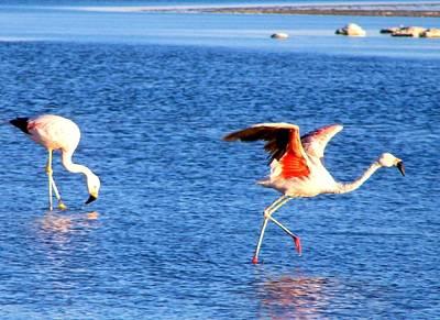 Flamingos Flamencos Poster by Sandra Lira