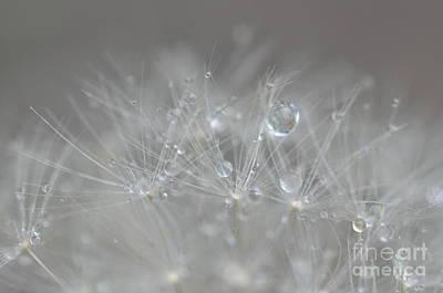Fleur Cristalline Poster by Sylvie Leandre
