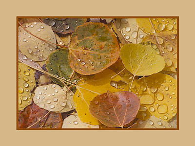 Floating Aspen Leaves Poster