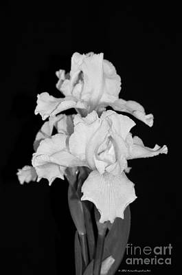 Floral Black And White Iris Flower Bouquet Poster