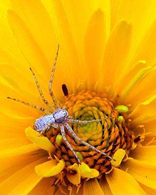 Floral Spider Poster