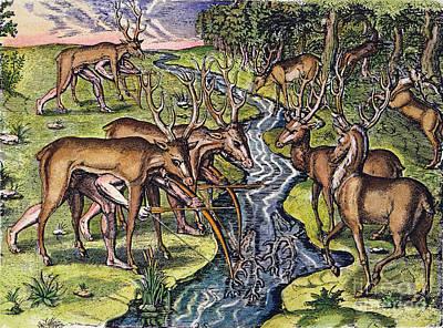 Florida Native Americans: Hunt, 1591 Poster by Granger