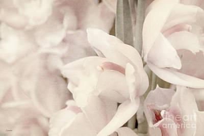 Flower Dream Poster