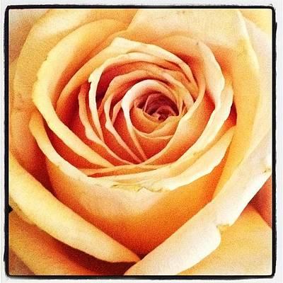 #flower #flowers #flowerlovers #roses Poster