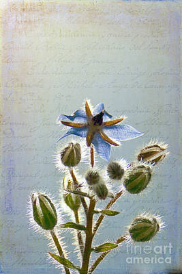 Flower Fuzz Poster
